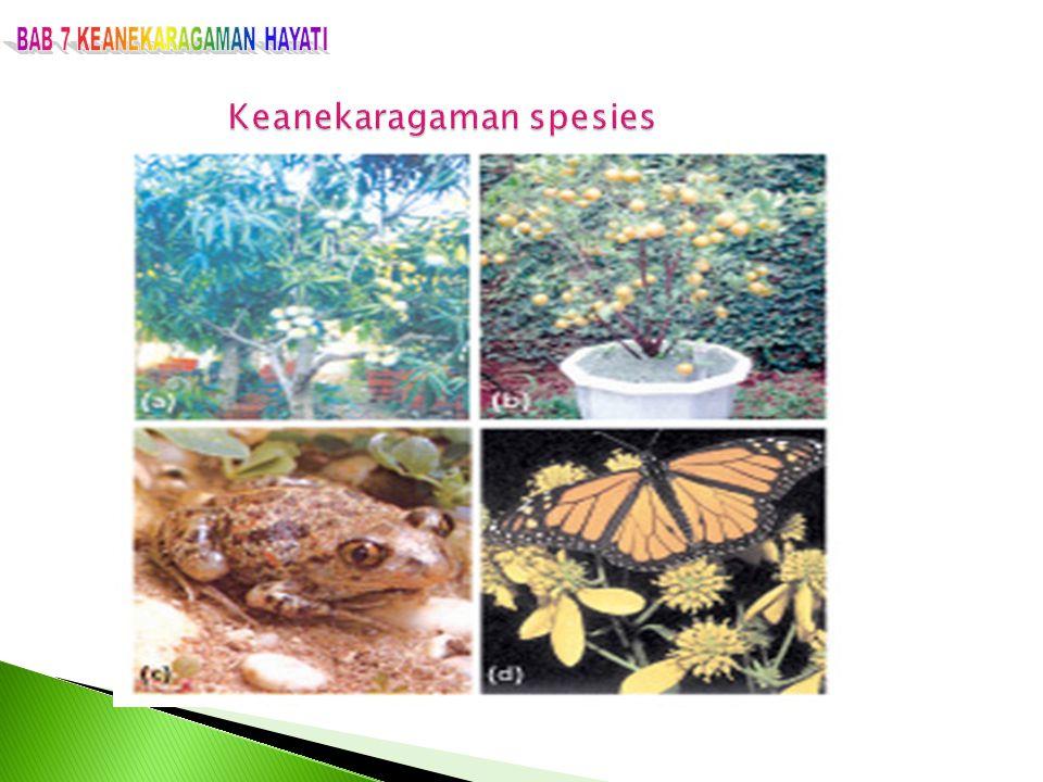 Disebabkan antara lain oleh: 1.Fragmentasi dan hilangnya habitat 2.