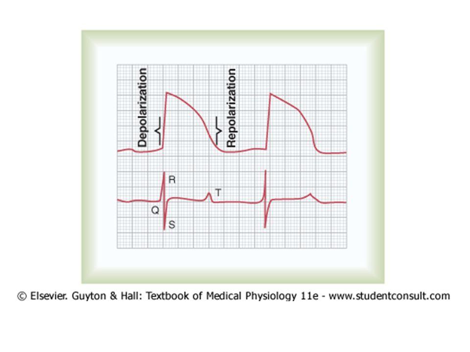 Hubungan EKG dan kontraksi Kontraksi atrium – Gelombang P: awal kontraksi – Repolarisasi atrium: setelah 0,15-0,20 detik ditutup depolarisasi ventrikel Kontraksi ventrikel – Komples QRS: awal kontraksi – Gelombang T: akhir kontraksi, 0,25-0,35 detik – Repolarisasi sudah dimulai 0,20 detik