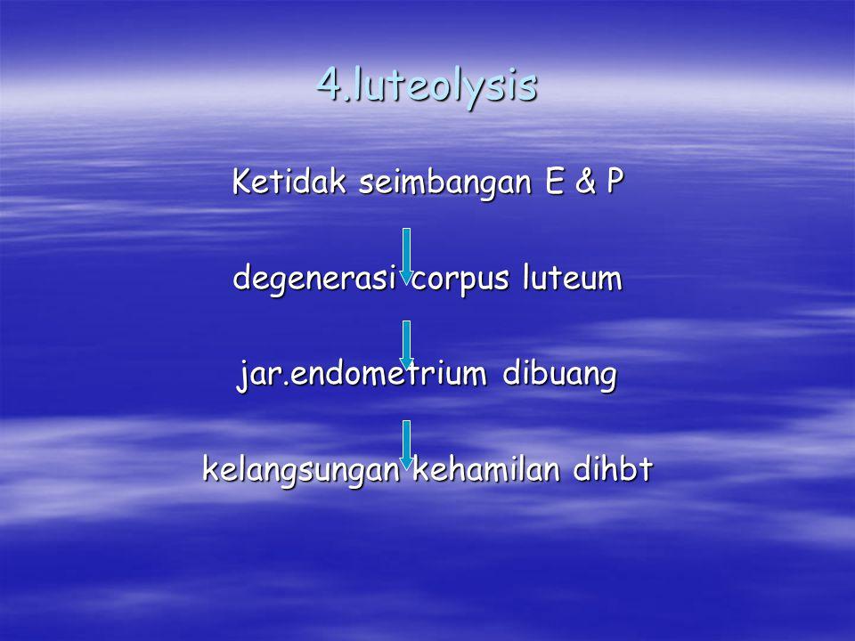 4.luteolysis Ketidak seimbangan E & P degenerasi corpus luteum jar.endometrium dibuang kelangsungan kehamilan dihbt