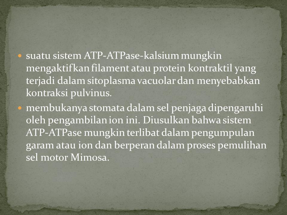 suatu sistem ATP-ATPase-kalsium mungkin mengaktifkan filament atau protein kontraktil yang terjadi dalam sitoplasma vacuolar dan menyebabkan kontraksi pulvinus.