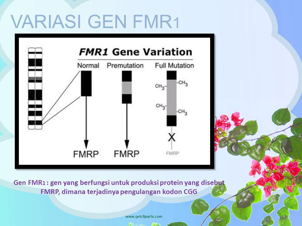 VARIASI GEN FMR 1 Gen FMR 1 : gen yang berfungsi untuk produksi protein yang disebut FMRP, dimana terjadinya pengulangan kodon CGG