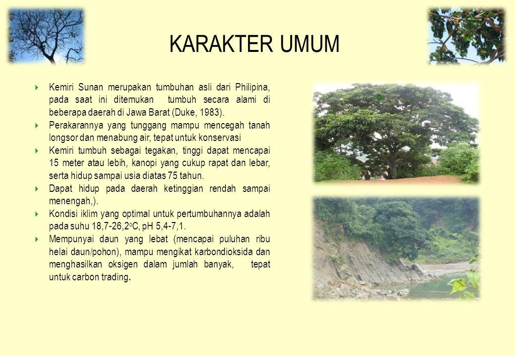KARAKTER UMUM  Kemiri Sunan merupakan tumbuhan asli dari Philipina, pada saat ini ditemukan tumbuh secara alami di beberapa daerah di Jawa Barat (Duk
