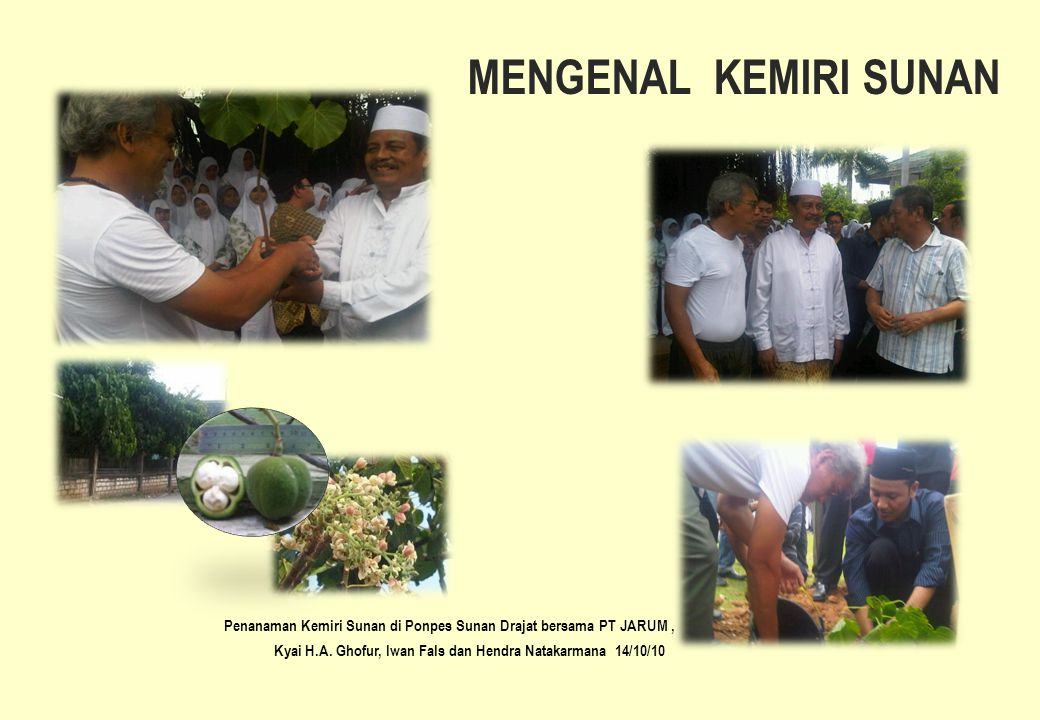 MENGENAL KEMIRI SUNAN Kyai H.A. Ghofur, Iwan Fals dan Hendra Natakarmana 14/10/10 Penanaman Kemiri Sunan di Ponpes Sunan Drajat bersama PT JARUM,