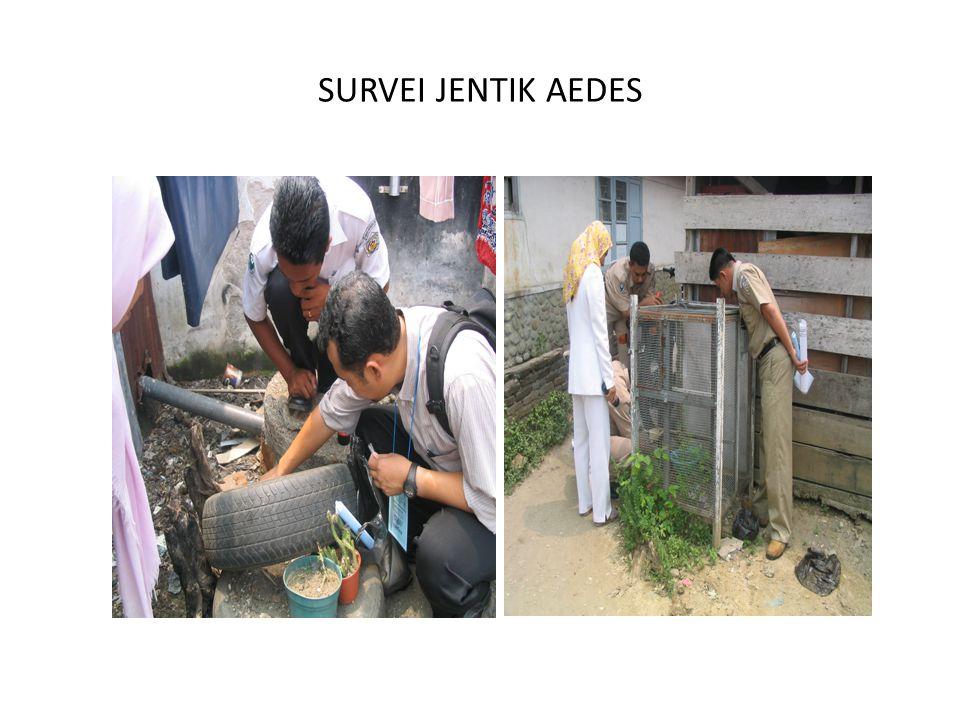 SURVEI JENTIK AEDES