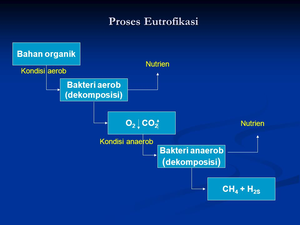 Proses Eutrofikasi Bahan organik Bakteri anaerob ( dekomposisi ) Bakteri aerob (dekomposisi) O 2 CO 2 CH 4 + H 2S Kondisi aerob Kondisi anaerob Nutrie