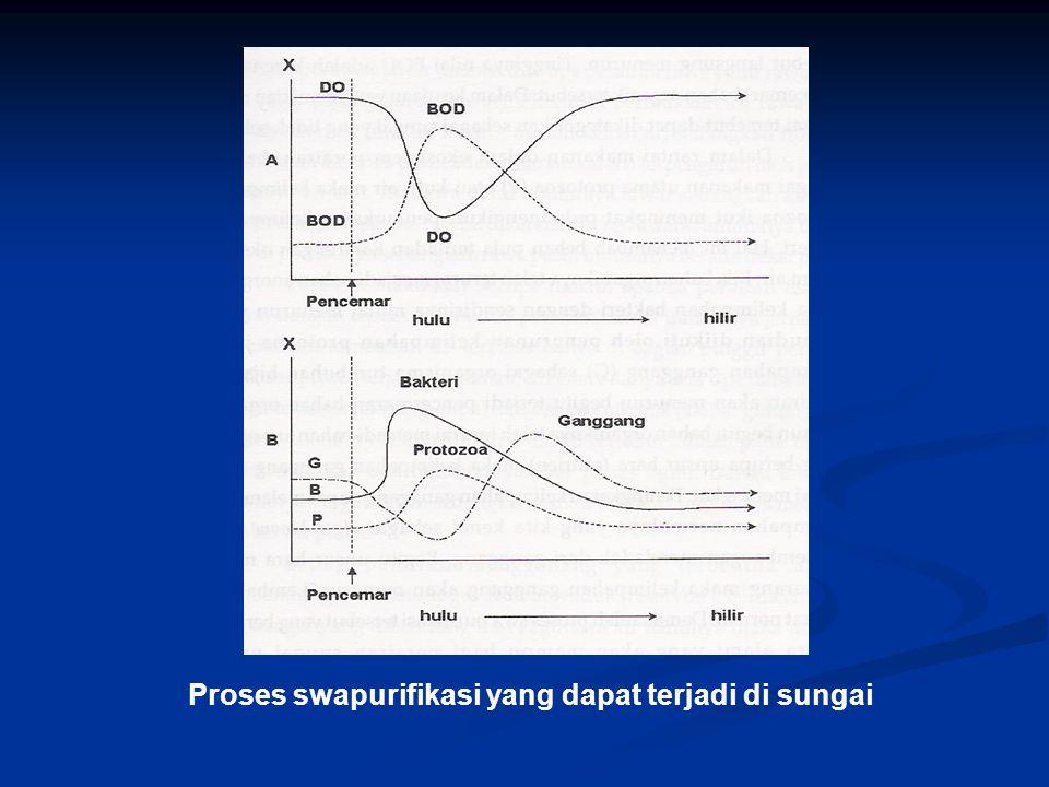 Proses swapurifikasi yang dapat terjadi di sungai
