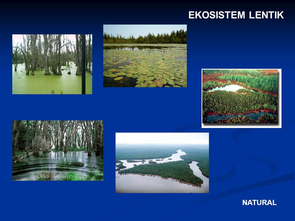 EKOSISTEM LENTIK NATURAL