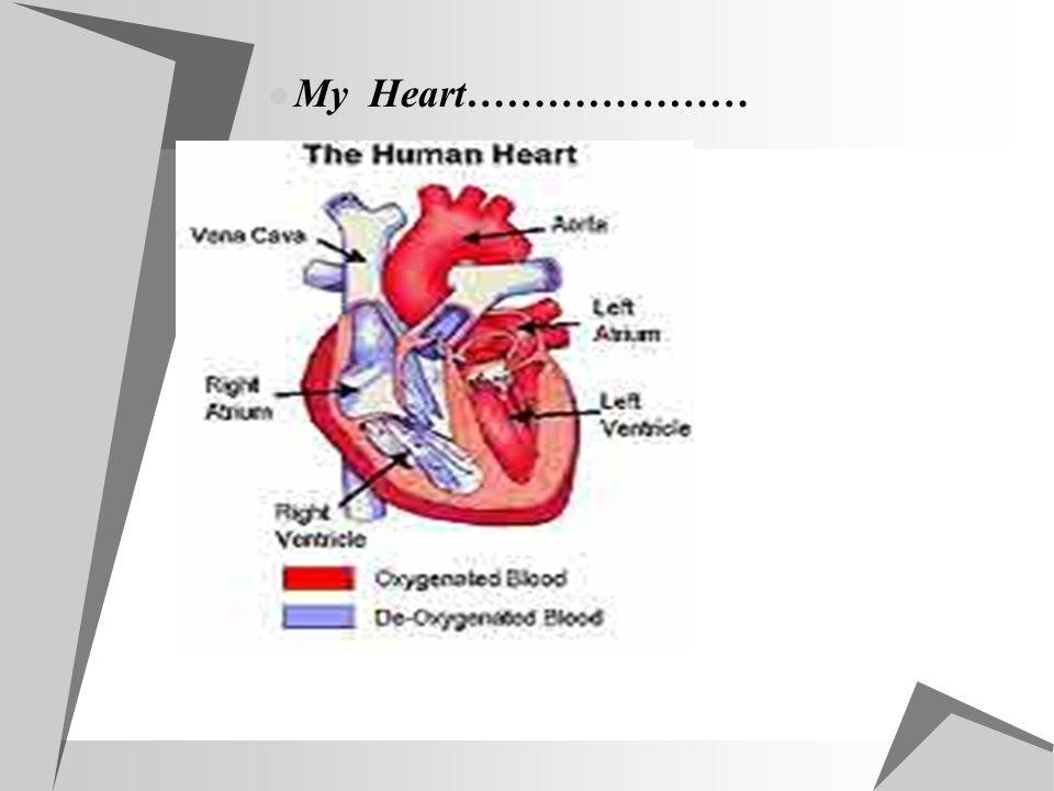 My Heart…………………