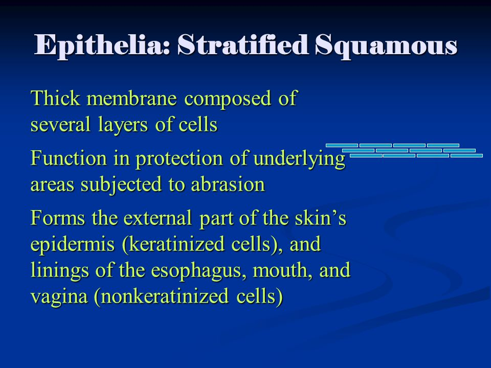 Epithelia: Stratified Squamous Thick membrane composed of several layers of cells Function in protection of underlying areas subjected to abrasion Forms the external part of the skin's epidermis (keratinized cells), and linings of the esophagus, mouth, and vagina (nonkeratinized cells)