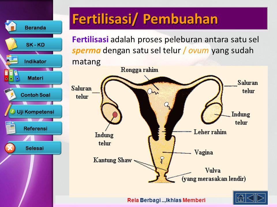 Rela Berbagi..,Ikhlas Memberi Fertilisasi/ Pembuahan Fertilisasi adalah proses peleburan antara satu sel sperma dengan satu sel telur / ovum yang suda