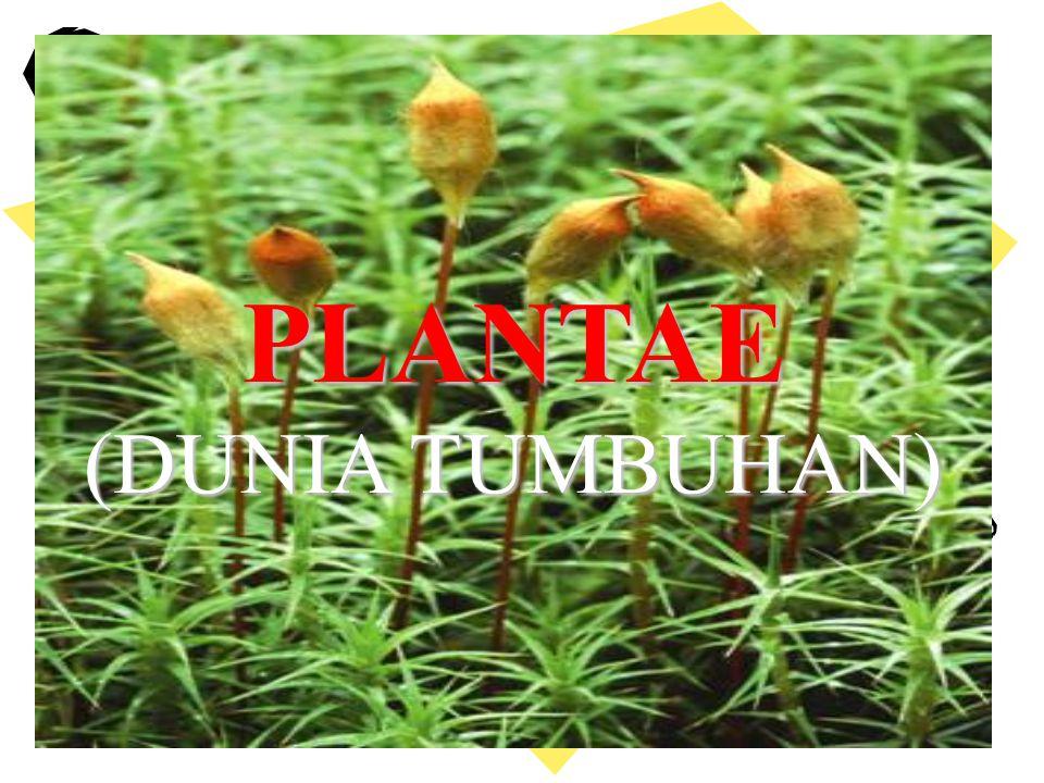 PLANTAEPLANTAE (DUNIA TUMBUHAN) PLANTAE