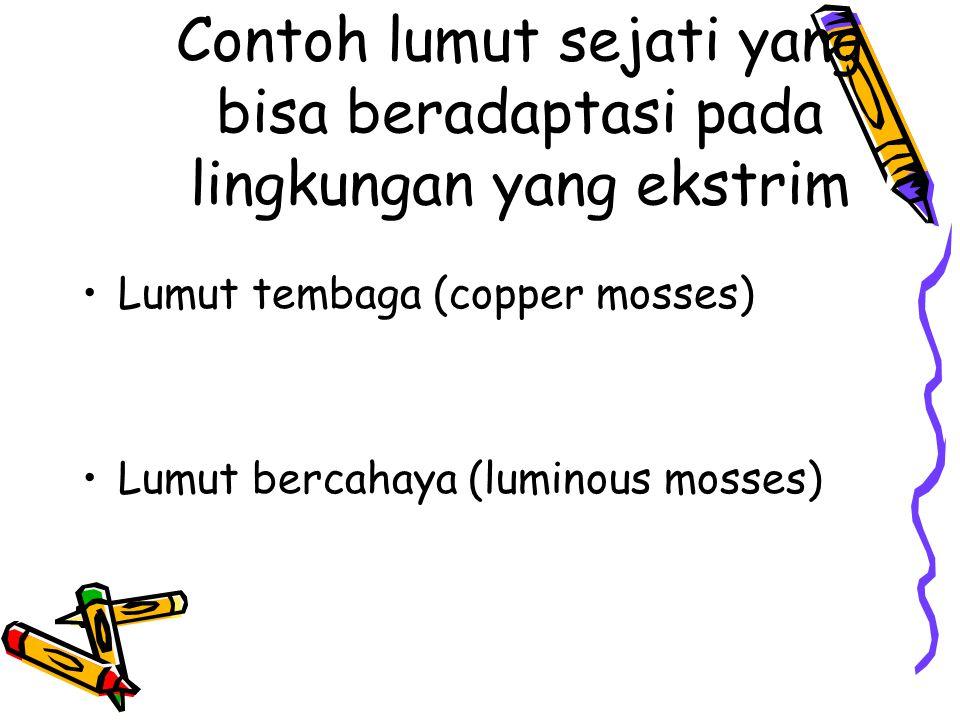 Contoh lumut sejati yang bisa beradaptasi pada lingkungan yang ekstrim Lumut tembaga (copper mosses) Lumut bercahaya (luminous mosses)