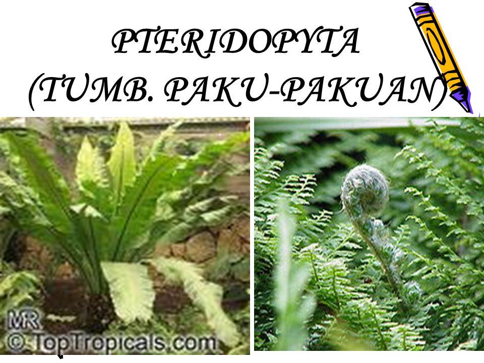 PTERIDOPYTA (TUMB. PAKU-PAKUAN)