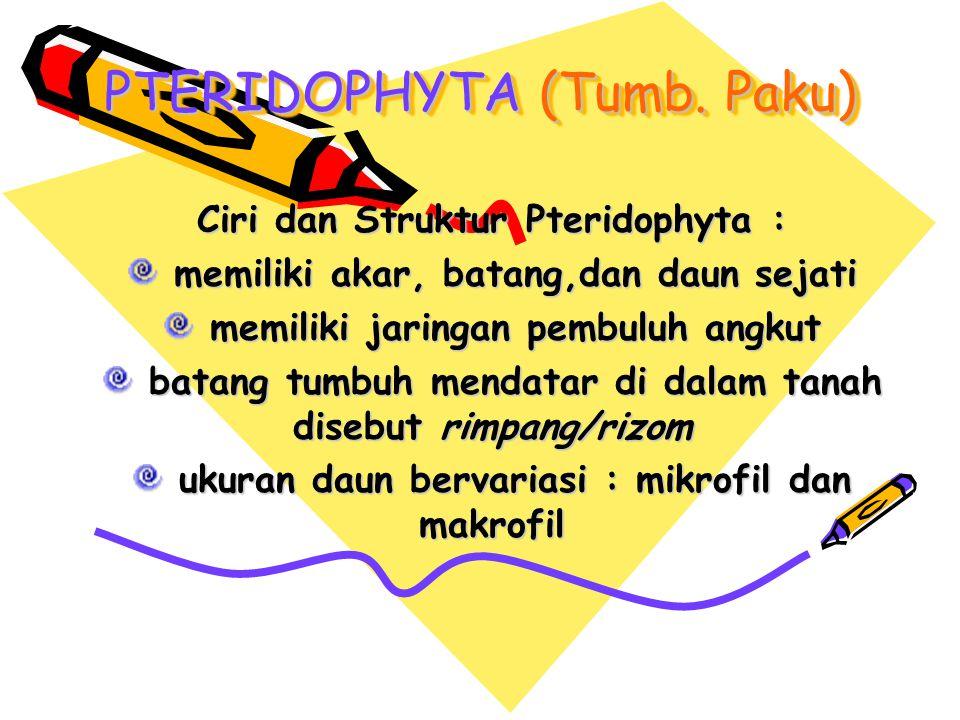 PTERIDOPHYTA (Tumb. Paku) Ciri dan Struktur Pteridophyta : memiliki akar, batang,dan daun sejati memiliki akar, batang,dan daun sejati memiliki jaring