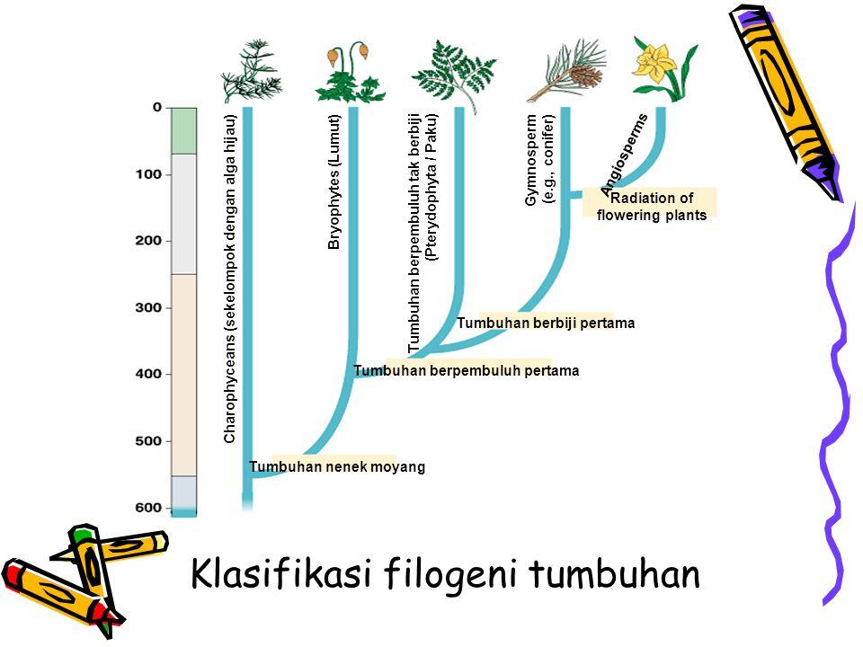 Klasifikasi filogeni tumbuhan Radiation of flowering plants Charophyceans (sekelompok dengan alga hijau) Bryophytes (Lumut) Tumbuhan berpembuluh tak b