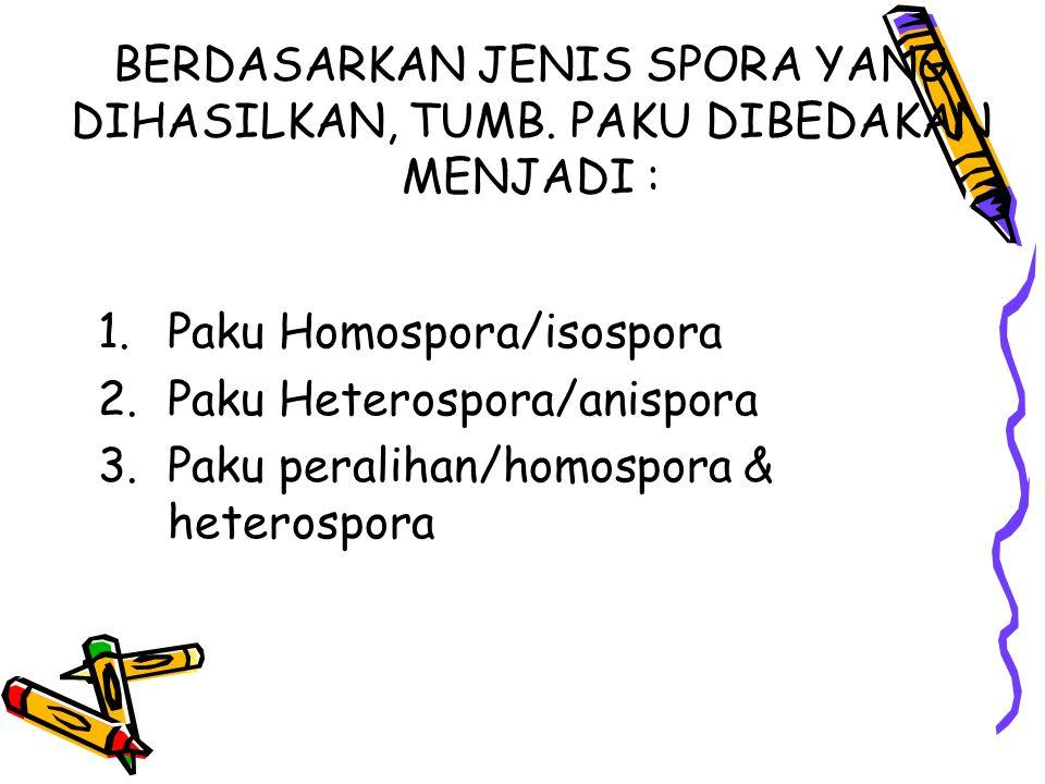 BERDASARKAN JENIS SPORA YANG DIHASILKAN, TUMB. PAKU DIBEDAKAN MENJADI : 1.Paku Homospora/isospora 2.Paku Heterospora/anispora 3.Paku peralihan/homospo
