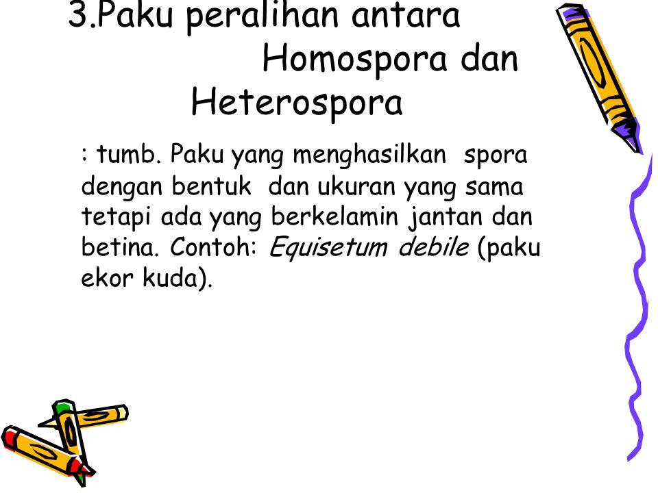 3.Paku peralihan antara Homospora dan Heterospora : tumb. Paku yang menghasilkan spora dengan bentuk dan ukuran yang sama tetapi ada yang berkelamin j