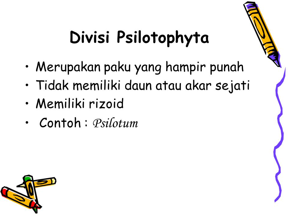 Divisi Psilotophyta Merupakan paku yang hampir punah Tidak memiliki daun atau akar sejati Memiliki rizoid Contoh : Psilotum