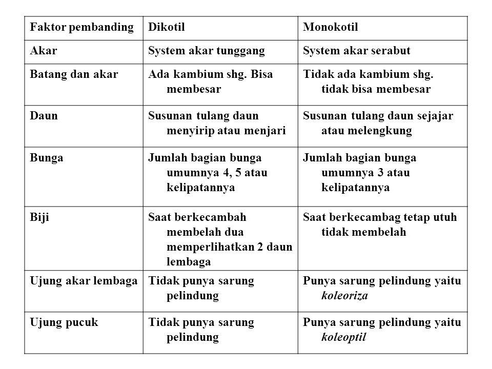 Faktor pembandingDikotilMonokotil AkarSystem akar tunggangSystem akar serabut Batang dan akarAda kambium shg. Bisa membesar Tidak ada kambium shg. tid