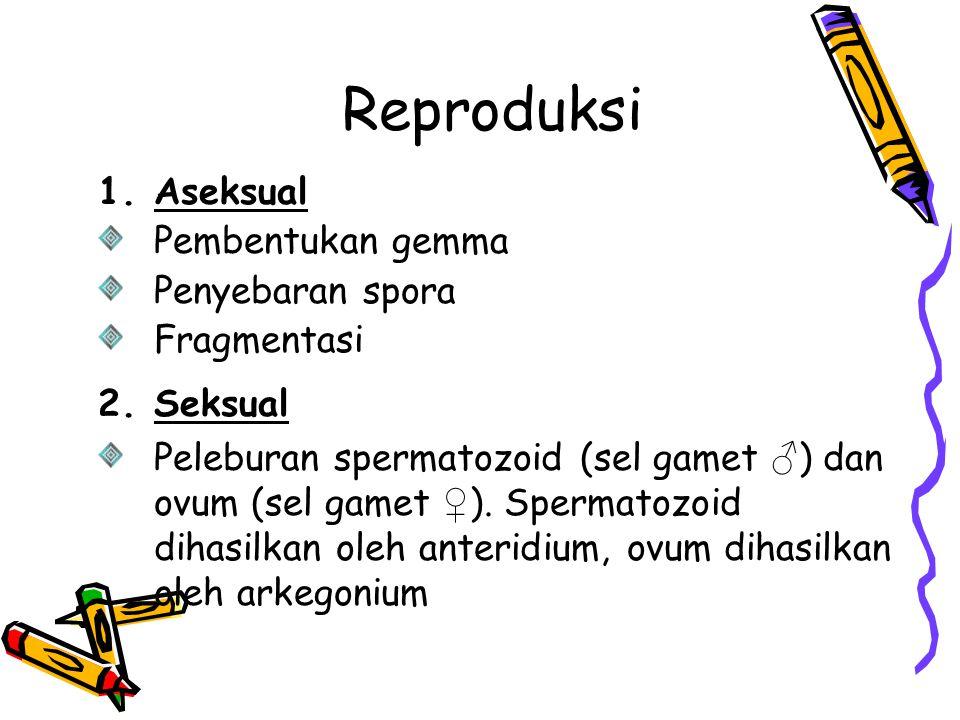 Reproduksi 1.Aseksual Pembentukan gemma Penyebaran spora Fragmentasi 2.Seksual Peleburan spermatozoid (sel gamet ♂ ) dan ovum (sel gamet ♀ ). Spermato
