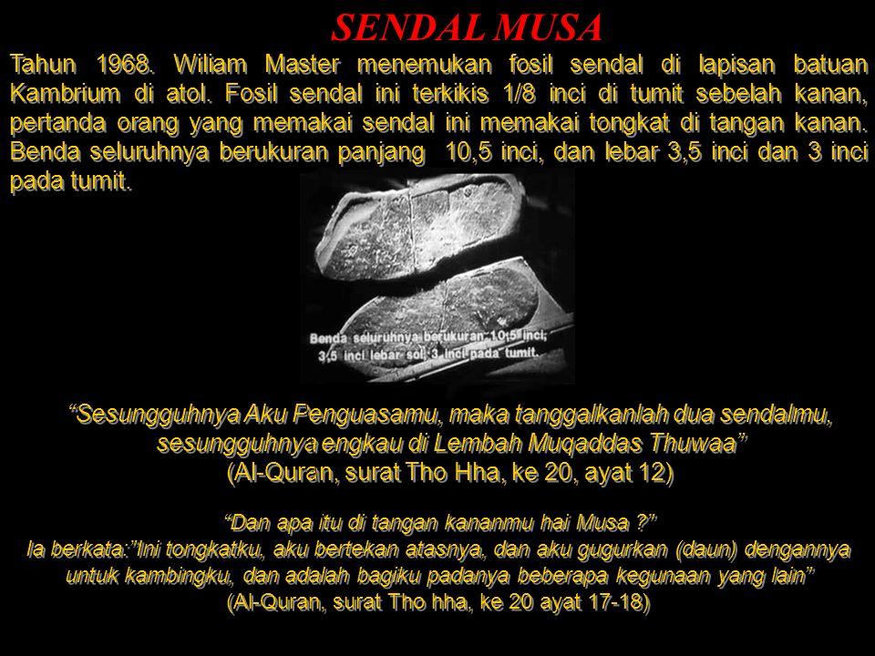 SENDAL MUSA Tahun 1968. Wiliam Master menemukan fosil sendal di lapisan batuan Kambrium di atol. Fosil sendal ini terkikis 1/8 inci di tumit sebelah k