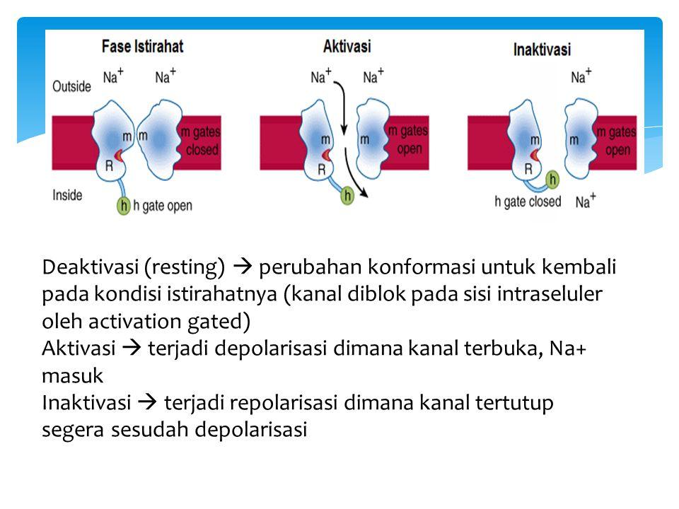 Deaktivasi (resting)  perubahan konformasi untuk kembali pada kondisi istirahatnya (kanal diblok pada sisi intraseluler oleh activation gated) Aktiva