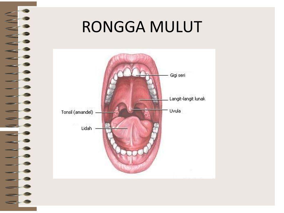 Pencernaan apa sajakah yang terjadi di mulut kita? Pencernaan secara mekanik dengan menggunakan gigi. Pencernaan secara kimiawi dengan menggunakan enz