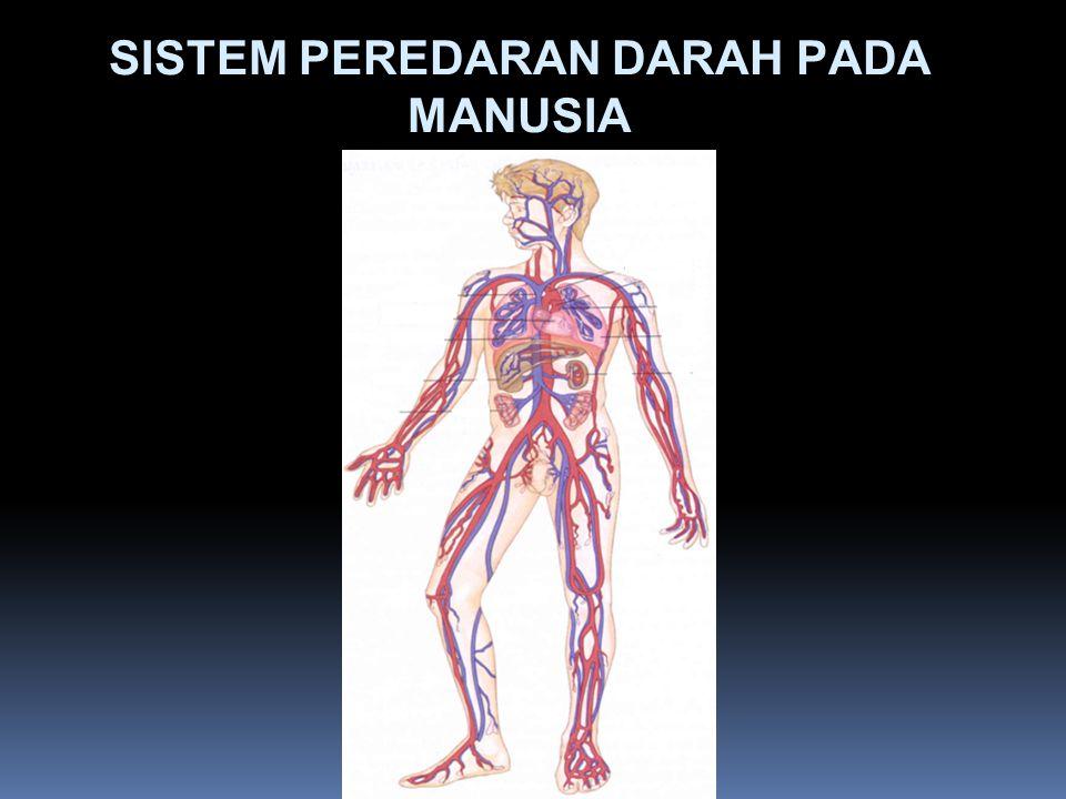 Organ Sistem Peredaran darah: darah, jantung, dan pembuluh.