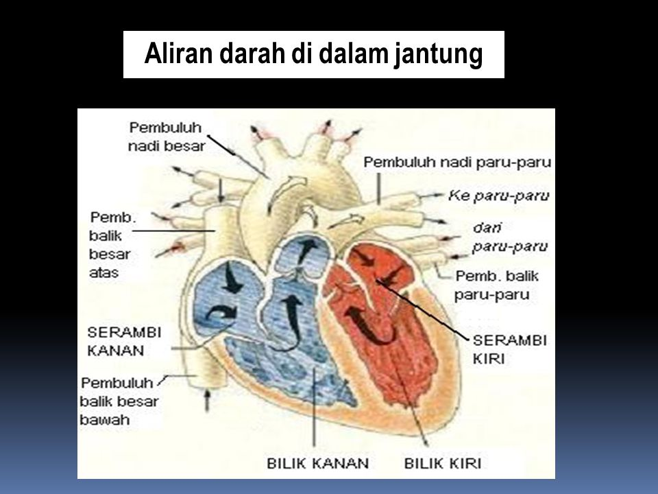 Aliran darah di dalam jantung