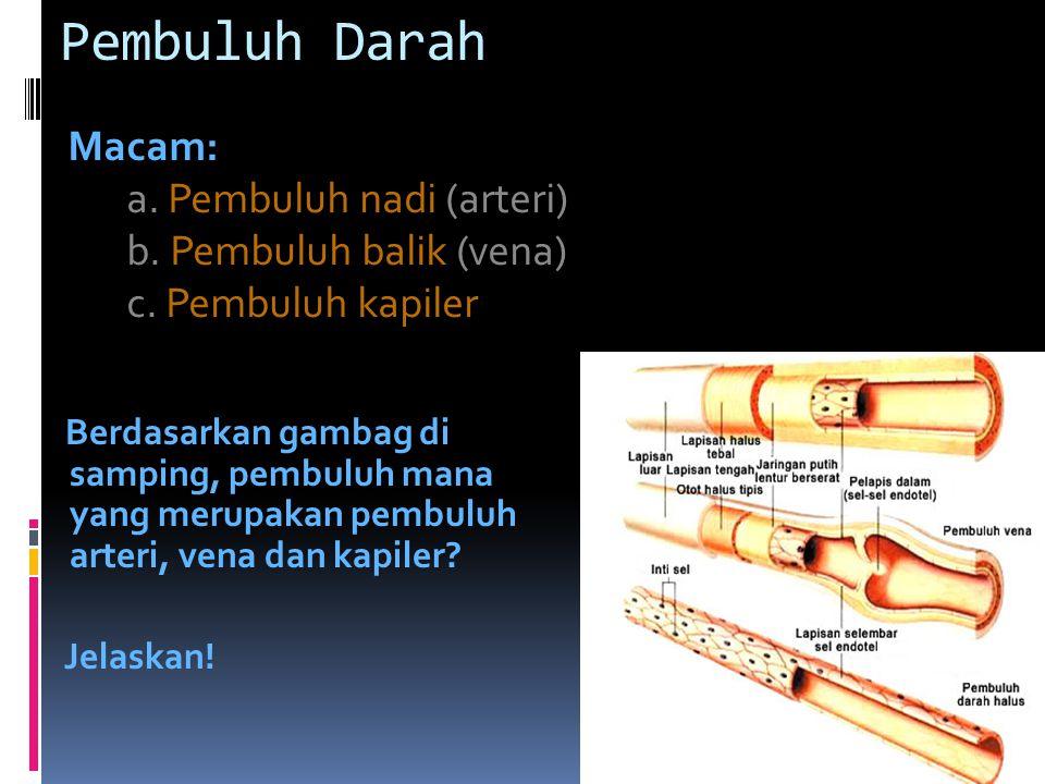 Pembuluh Darah Macam: a.Pembuluh nadi (arteri) b.