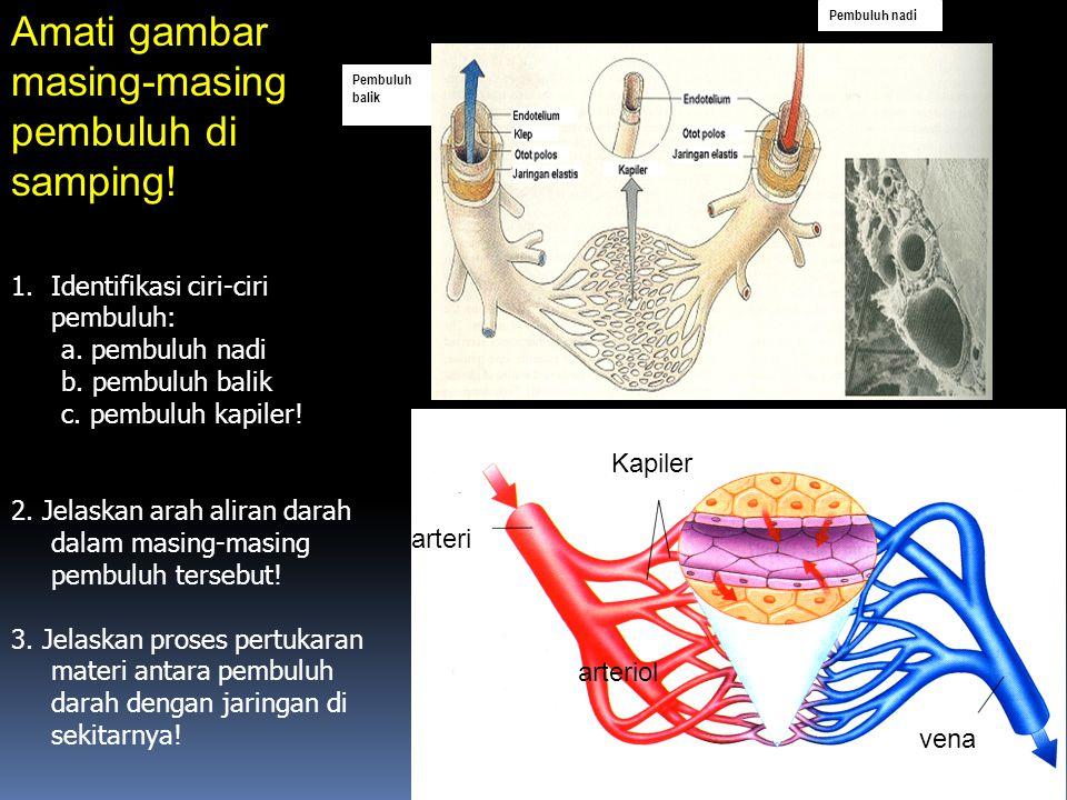 Pembulu h nadi Pembuluh balik 2.Jelaskan arah aliran darah dalam masing-masing pembuluh tersebut.