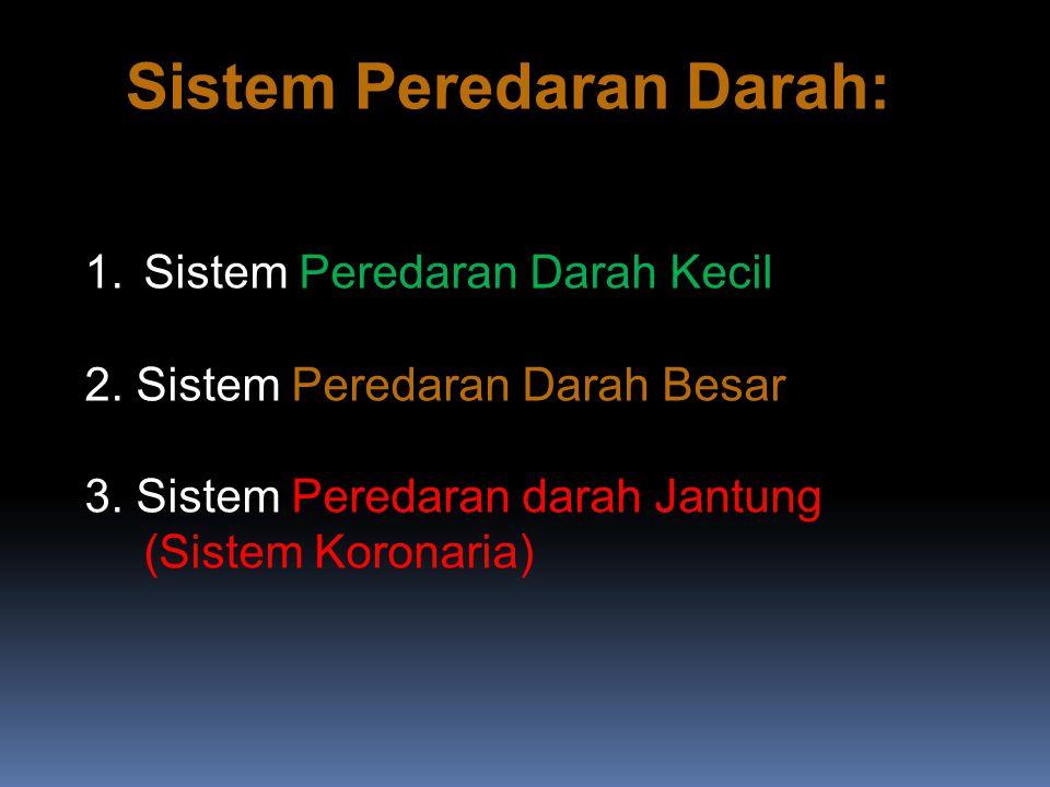 Sistem Peredaran Darah: 1.Sistem Peredaran Darah Kecil 2.