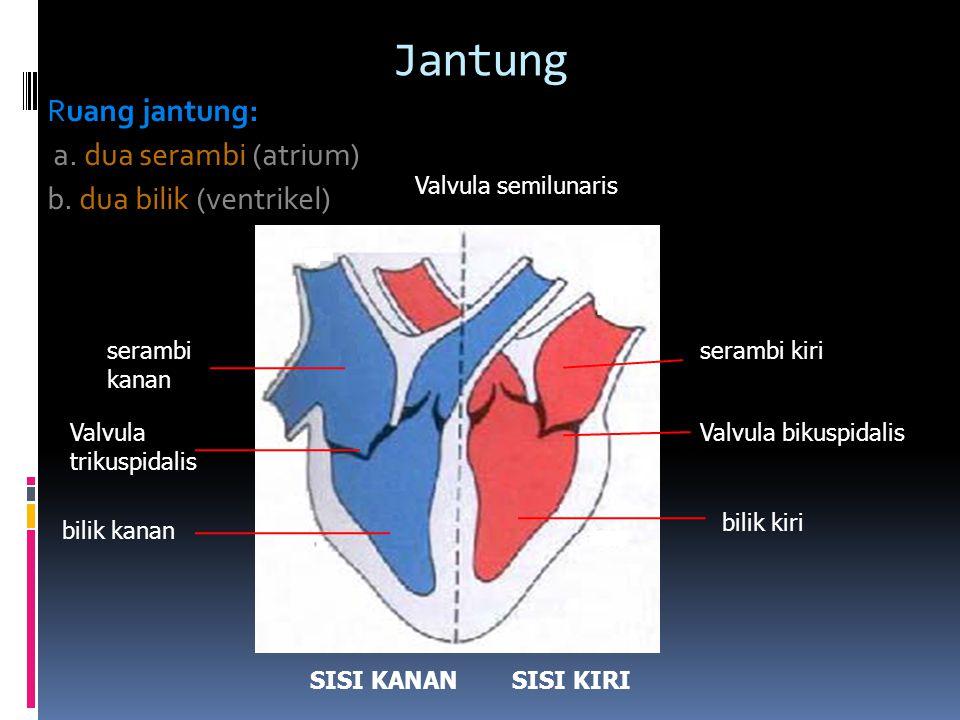 Sebutkan bagian-bagian jantung berikut ini.1. Di ruang manakah yang dindingnya lebih tebal.