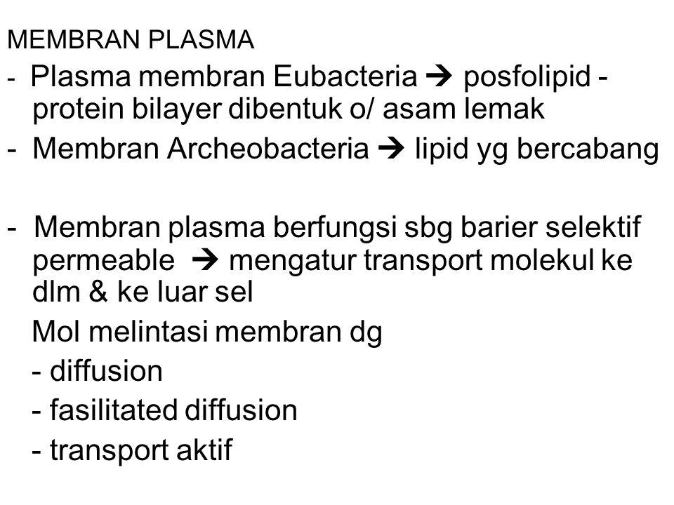 MEMBRAN PLASMA - Plasma membran Eubacteria  posfolipid - protein bilayer dibentuk o/ asam lemak -Membran Archeobacteria  lipid yg bercabang - Membran plasma berfungsi sbg barier selektif permeable  mengatur transport molekul ke dlm & ke luar sel Mol melintasi membran dg - diffusion - fasilitated diffusion - transport aktif