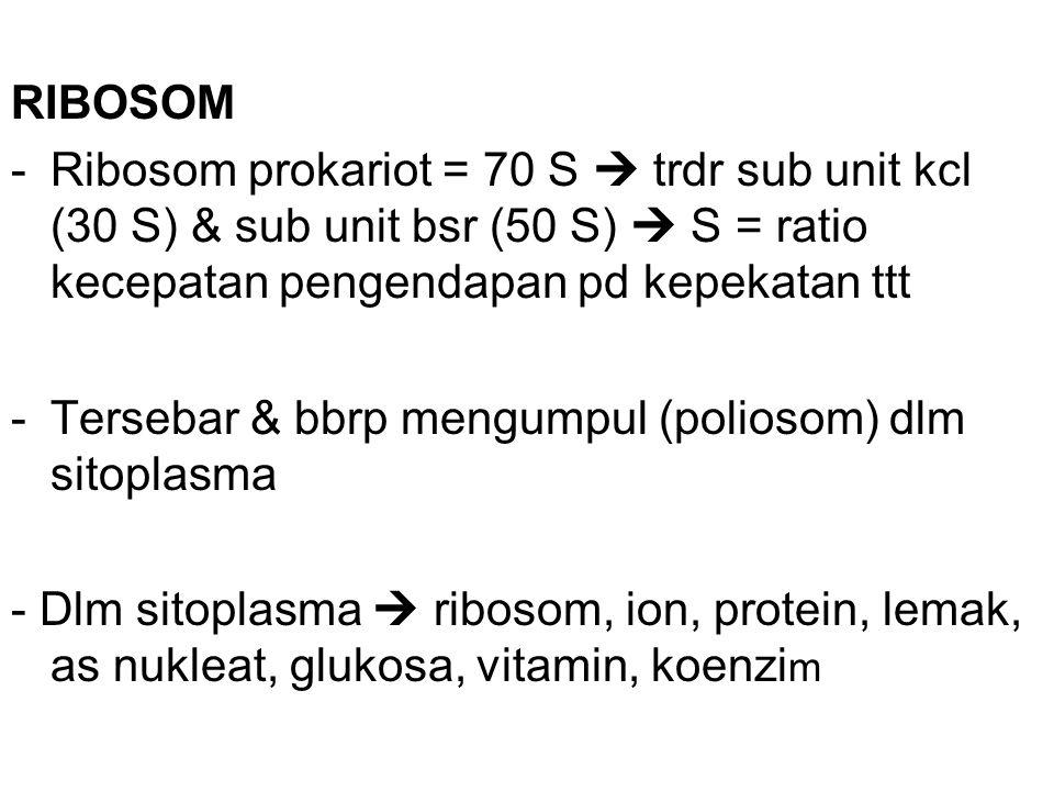 RIBOSOM -Ribosom prokariot = 70 S  trdr sub unit kcl (30 S) & sub unit bsr (50 S)  S = ratio kecepatan pengendapan pd kepekatan ttt -Tersebar & bbrp mengumpul (poliosom) dlm sitoplasma - Dlm sitoplasma  ribosom, ion, protein, lemak, as nukleat, glukosa, vitamin, koenzi m