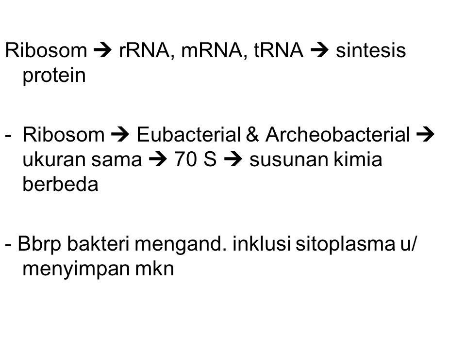 Ribosom  rRNA, mRNA, tRNA  sintesis protein -Ribosom  Eubacterial & Archeobacterial  ukuran sama  70 S  susunan kimia berbeda - Bbrp bakteri mengand.