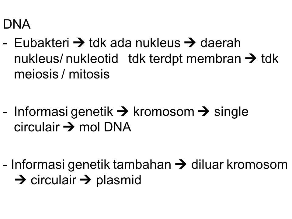 DNA -Eubakteri  tdk ada nukleus  daerah nukleus/ nukleotid tdk terdpt membran  tdk meiosis / mitosis -Informasi genetik  kromosom  single circulair  mol DNA - Informasi genetik tambahan  diluar kromosom  circulair  plasmid