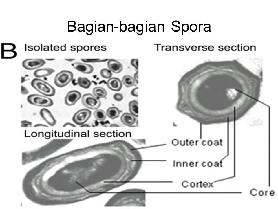 Bagian-bagian Spora