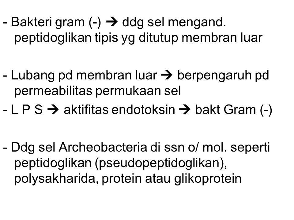 - Bakteri gram (-)  ddg sel mengand.