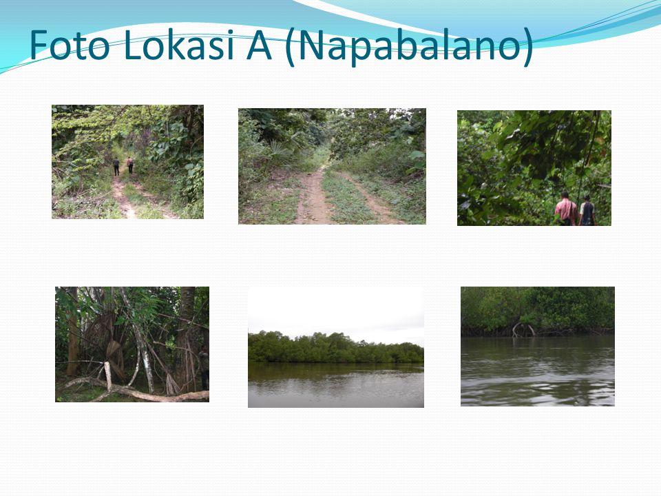 Foto Lokasi A (Napabalano)