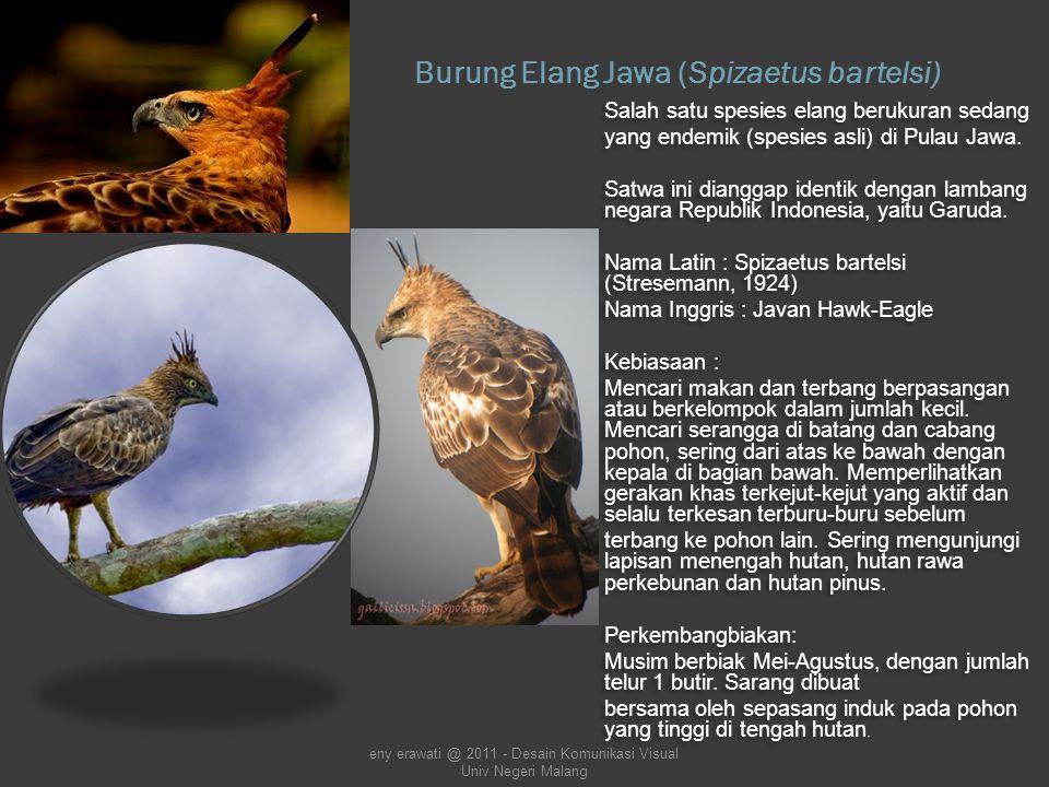 Legend of The Eagle Eye Legenda Mata Elang DKV 5, Portofolio EO eny erawati @ 2011 - Desain Komunikasi Visual Univ Negeri Malang