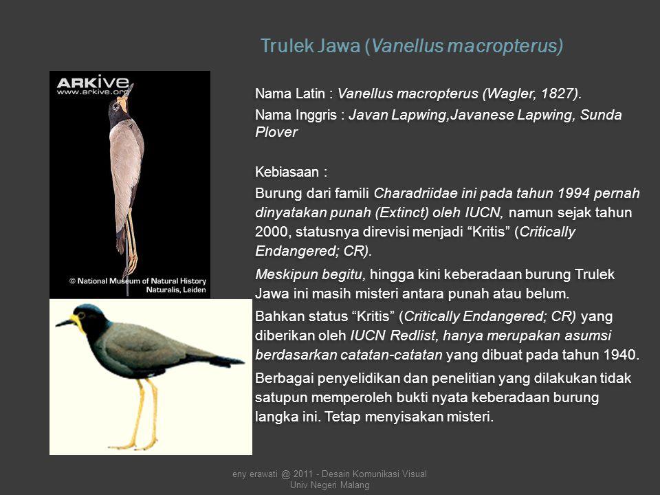 Kijang (Muntiacus muntjak) Merupakan salah satu rusa asli Indonesia.