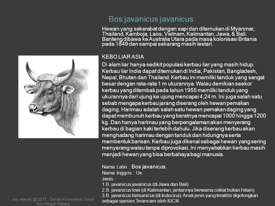 Trulek Jawa (Vanellus macropterus) Nama Latin : Vanellus macropterus (Wagler, 1827).