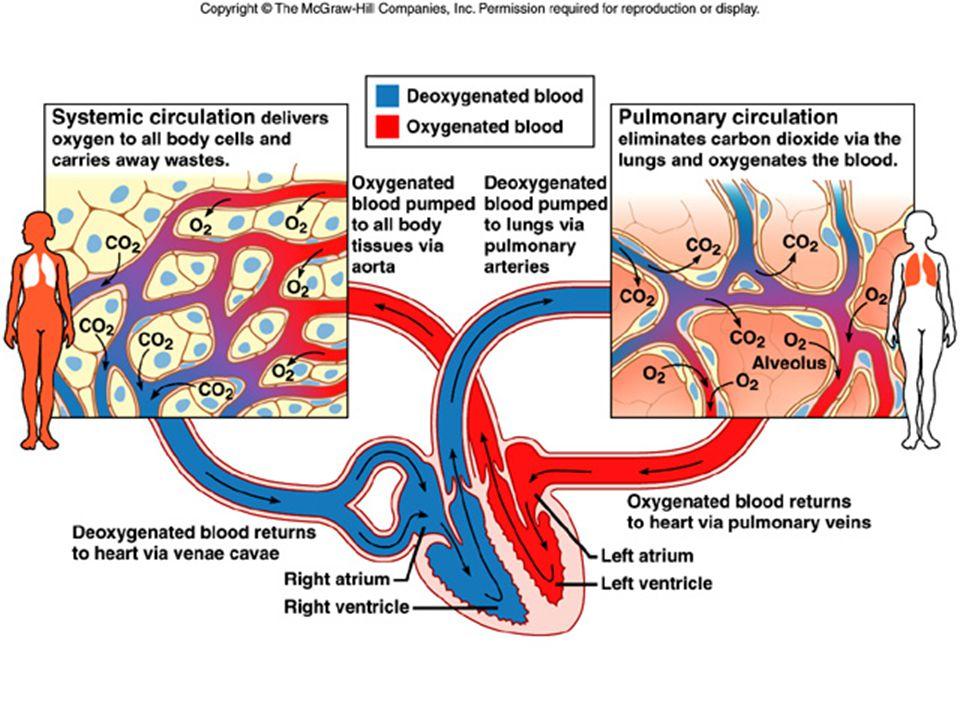 DIFUSI GAS Pertukaran antara O2 dan CO2 alveoli dengan kapiler paru Pertukaran antara O2 dan CO2 alveoli dengan kapiler paru Dipengaruhi oleh : Dipeng