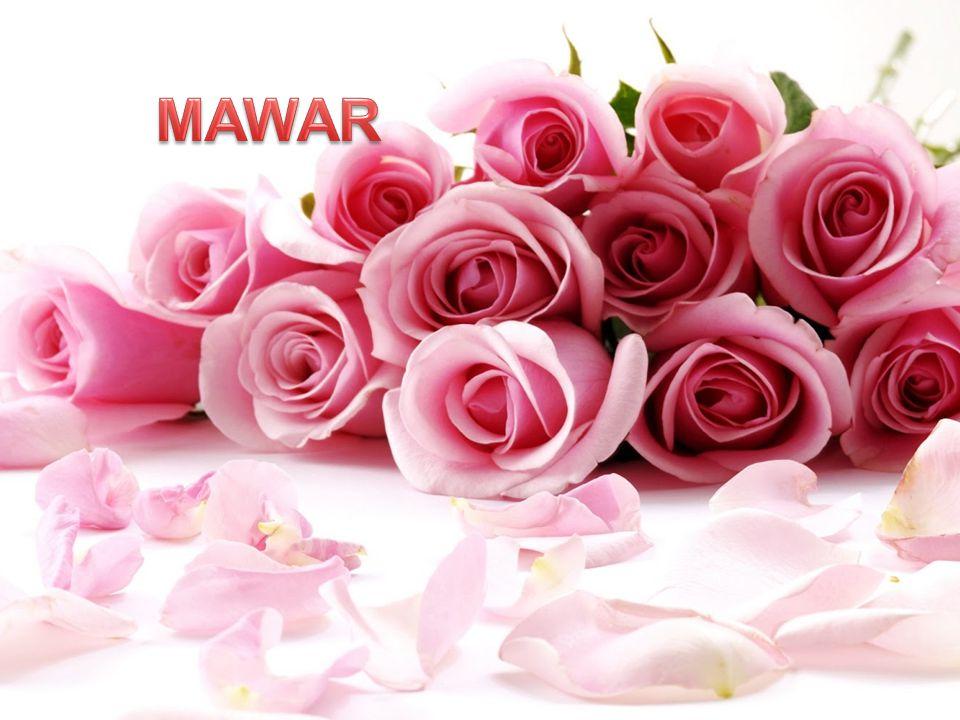 Mawar adalah suatu jenis tanaman semak dari genus Rosa sekaligus nama bunga yang dihasilkan tanaman ini.