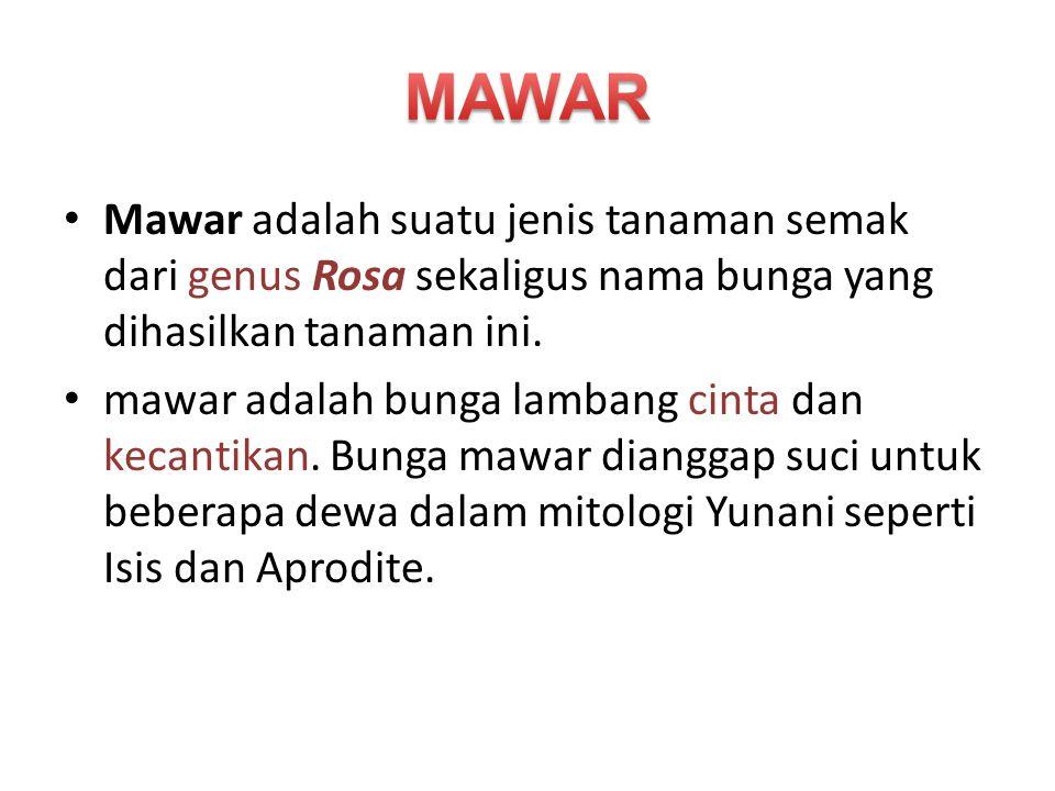 Mawar adalah suatu jenis tanaman semak dari genus Rosa sekaligus nama bunga yang dihasilkan tanaman ini. mawar adalah bunga lambang cinta dan kecantik