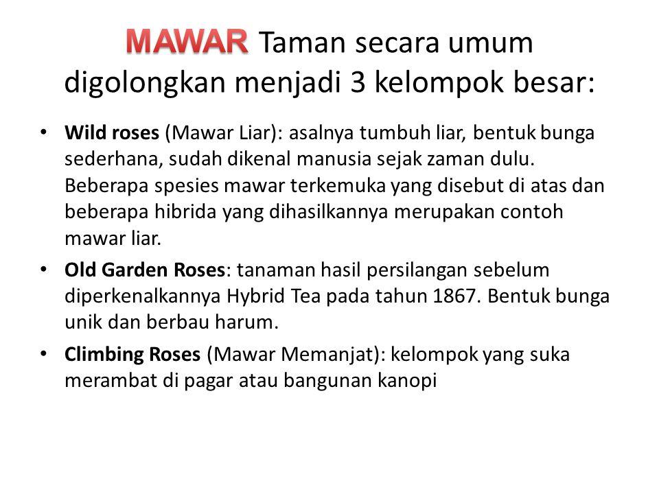 Wild roses (Mawar Liar): asalnya tumbuh liar, bentuk bunga sederhana, sudah dikenal manusia sejak zaman dulu. Beberapa spesies mawar terkemuka yang di
