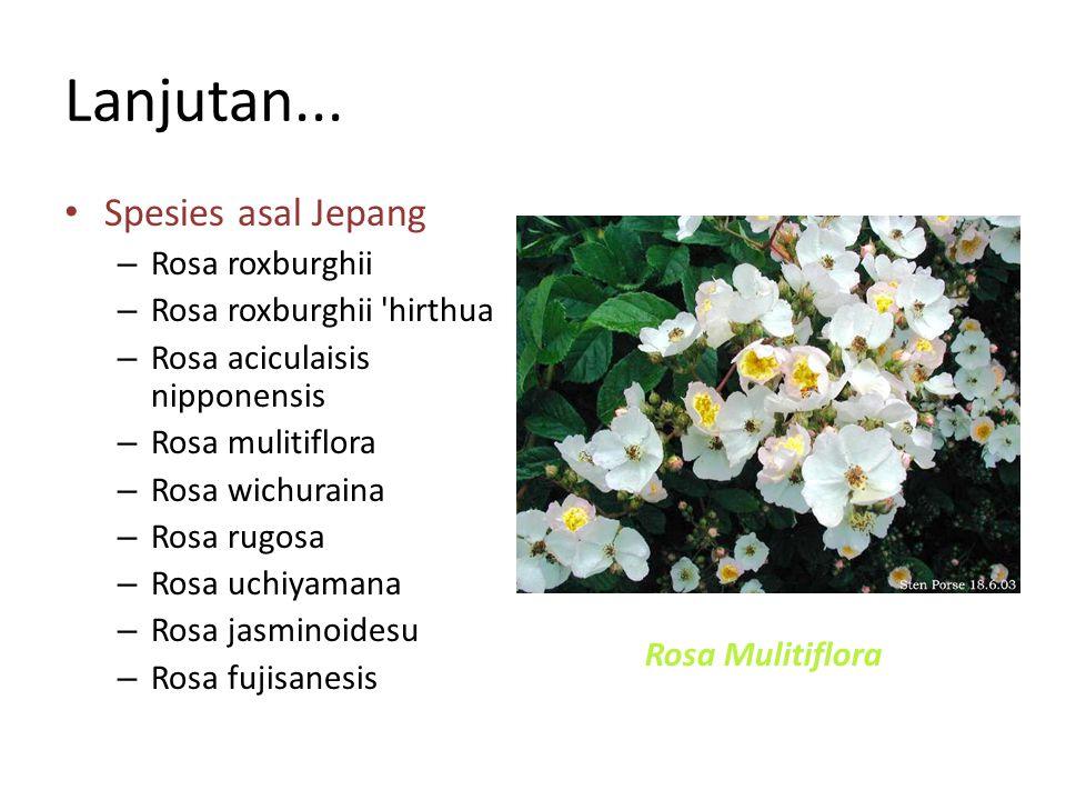 Lanjutan... Spesies asal Jepang – Rosa roxburghii – Rosa roxburghii 'hirthua – Rosa aciculaisis nipponensis – Rosa mulitiflora – Rosa wichuraina – Ros