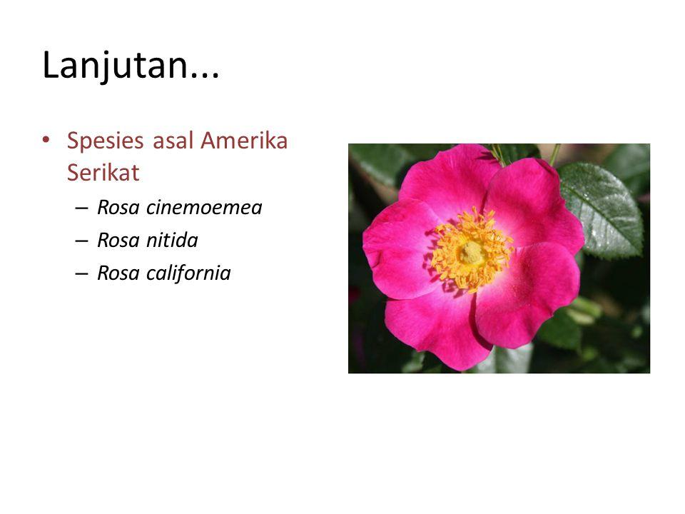 Menghilangkan Jerawat Air bunga mawar merupakan bahan pembersih alami yang kaya antioksidan dan mampu membunuh bakteri penyebab jerawat.