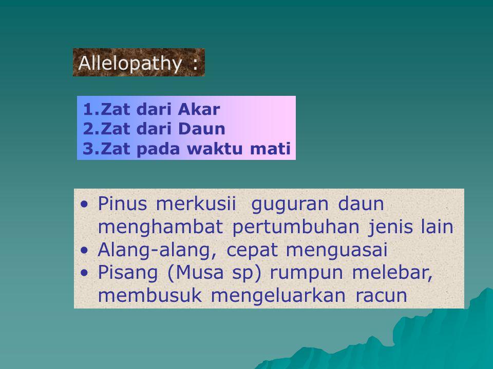 Allelopathy : 1.Zat dari Akar 2.Zat dari Daun 3.Zat pada waktu mati Pinus merkusii guguran daun menghambat pertumbuhan jenis lain Alang-alang, cepat m
